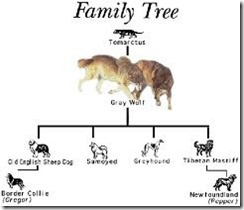 Dog Family Tree